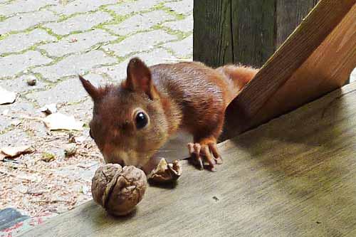 Fips, das Vogelschutzeichhörnchen